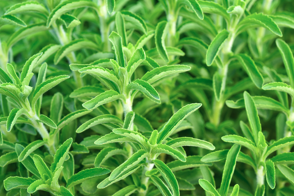 Vitosa stevia ingredient, HB Natural Ingredients