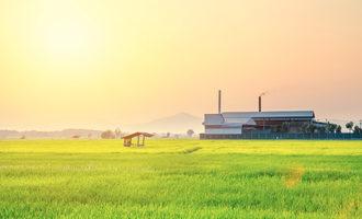 Riceproduction_lead
