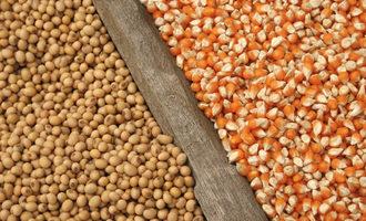 Soybeanscorn_lead