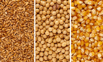 Wheatsoycorn_photo-cred-adobe-stock_e