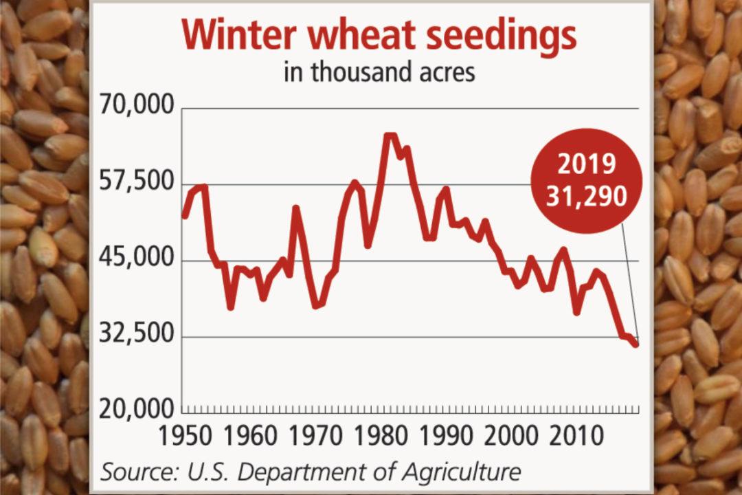 Winter wheat seedings chart