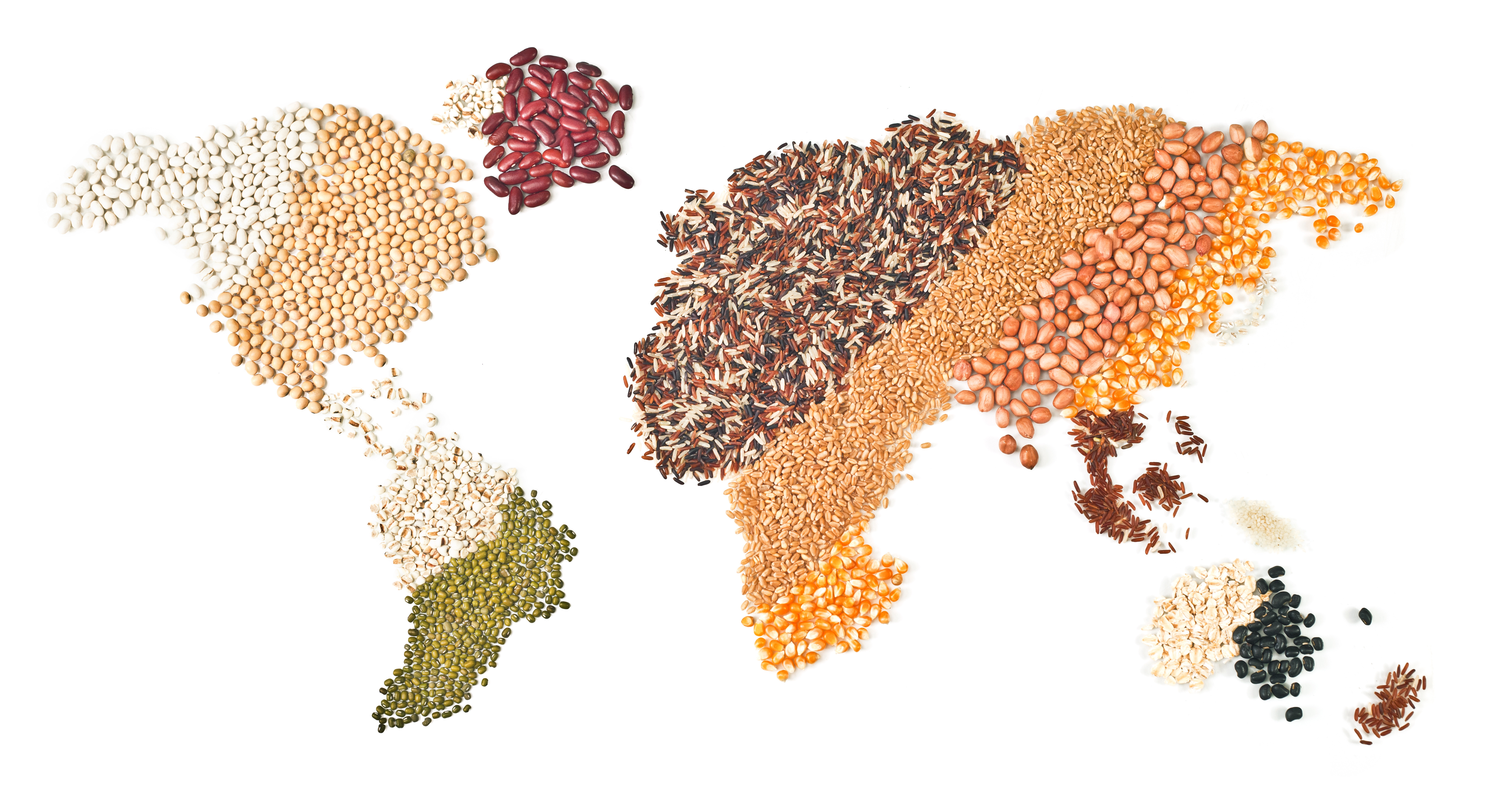 International Grains Council, grains, rice and oilseed on international map