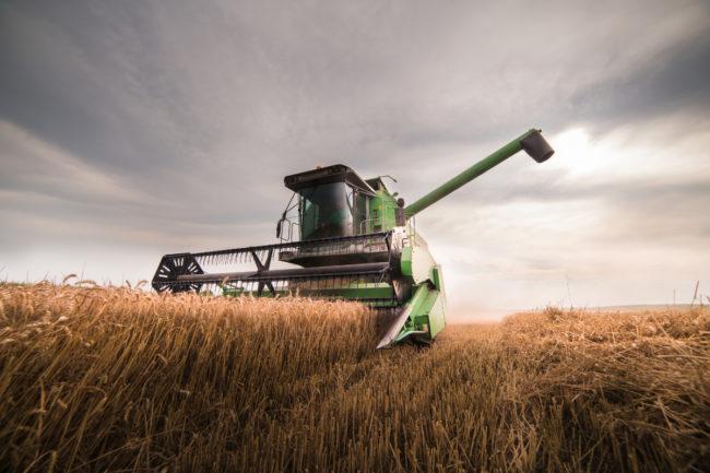 Winter wheat harvest