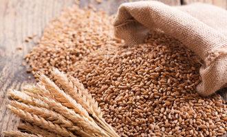 Organicwheat lead