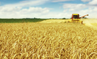 Wheat-field_adobestock_65088881_e2