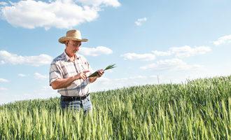 Wheatfarmer_lead