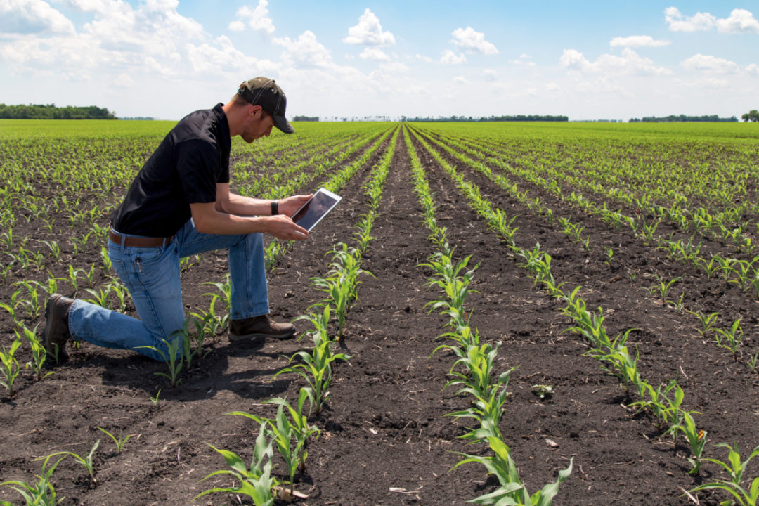 Farmer using tablet in field for sustainable agriculture
