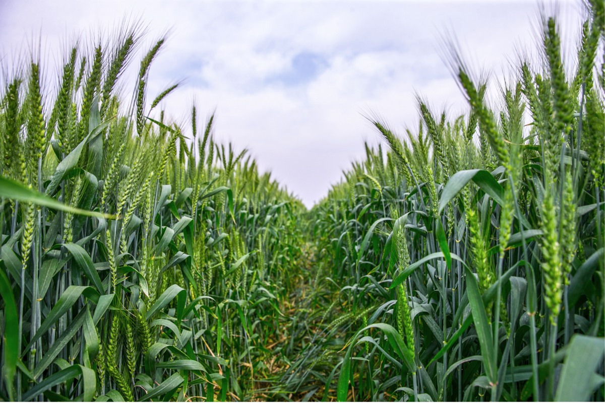 Corteva to invest in agricultural research company | 2019-08