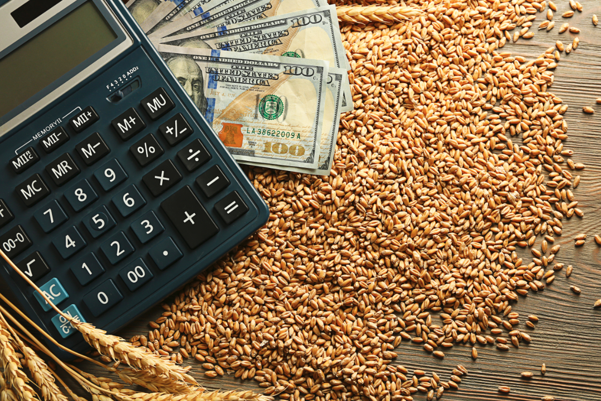 Wheat, money and calculator