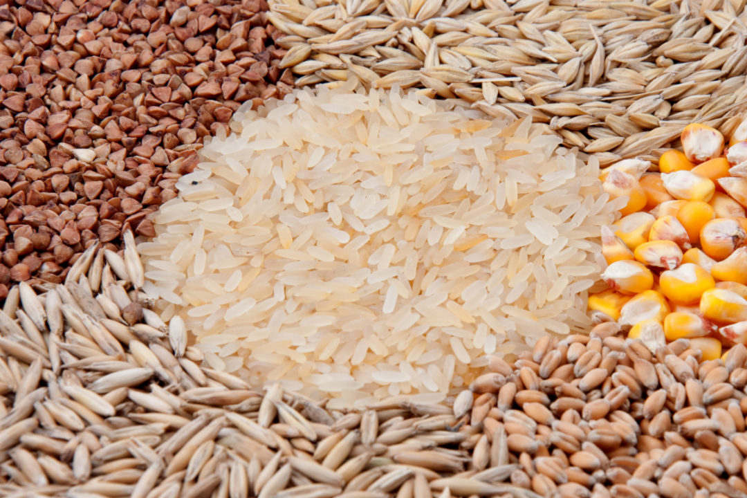 Food and Agriculture Organization of the United Nations new Cereal Supply and Demand Brief