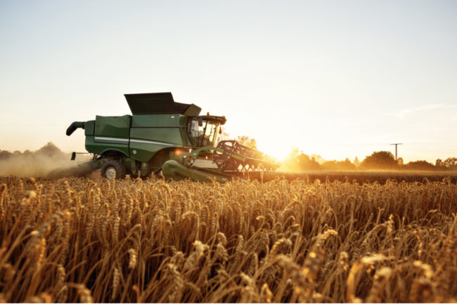 Fall harvest northern plains wheat growers