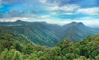 Rainforest_lead