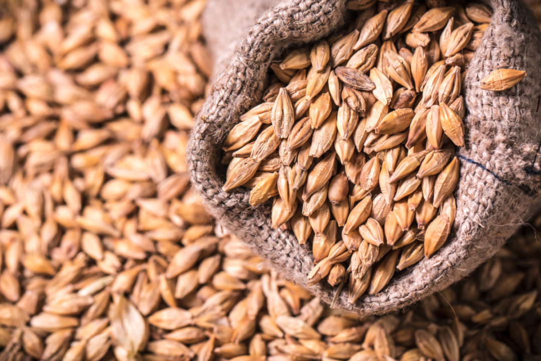 Bag of barley