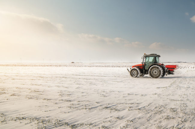 winter wheat seedings