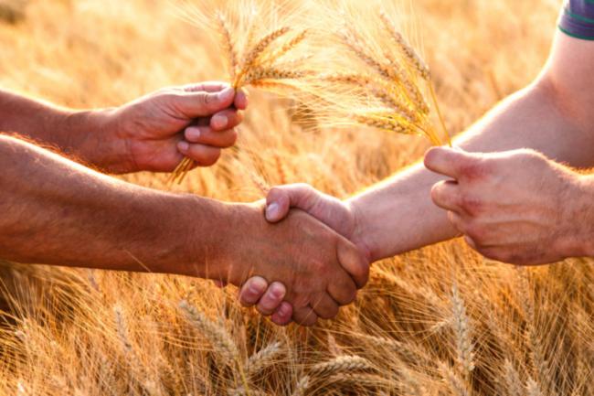 Farmers handshake over the wheat crop