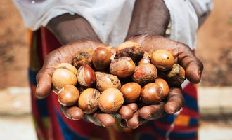 Sheanuts lead