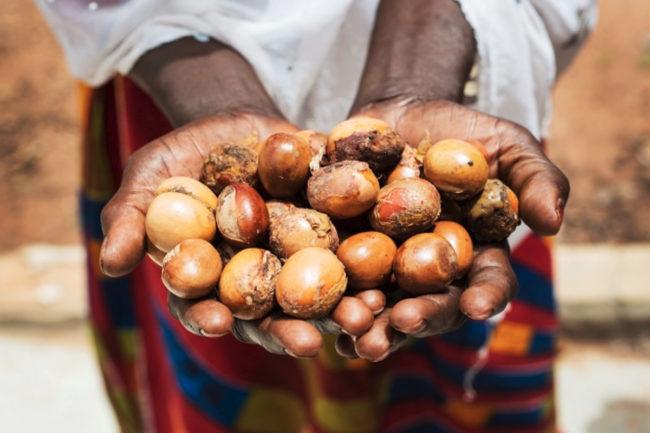 Woman holding shea nuts