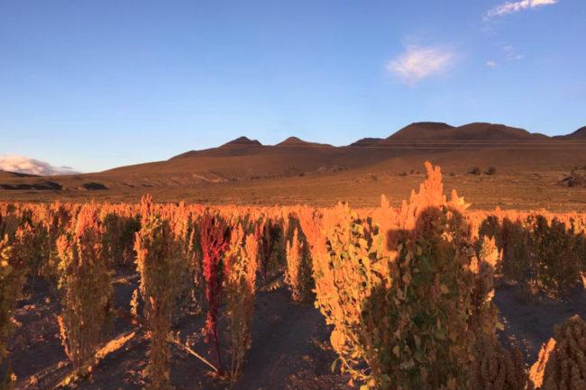 Andean Naturals quinoa in Yuba City, California