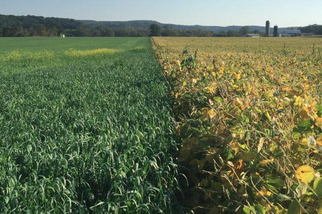 General Mills regenerative agriculture field