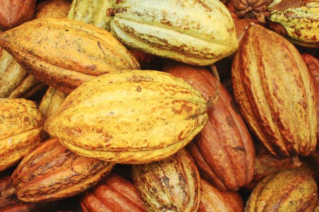 The Rainforest Alliance cocoa beans