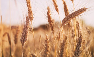 2020-wheat-tour_lead