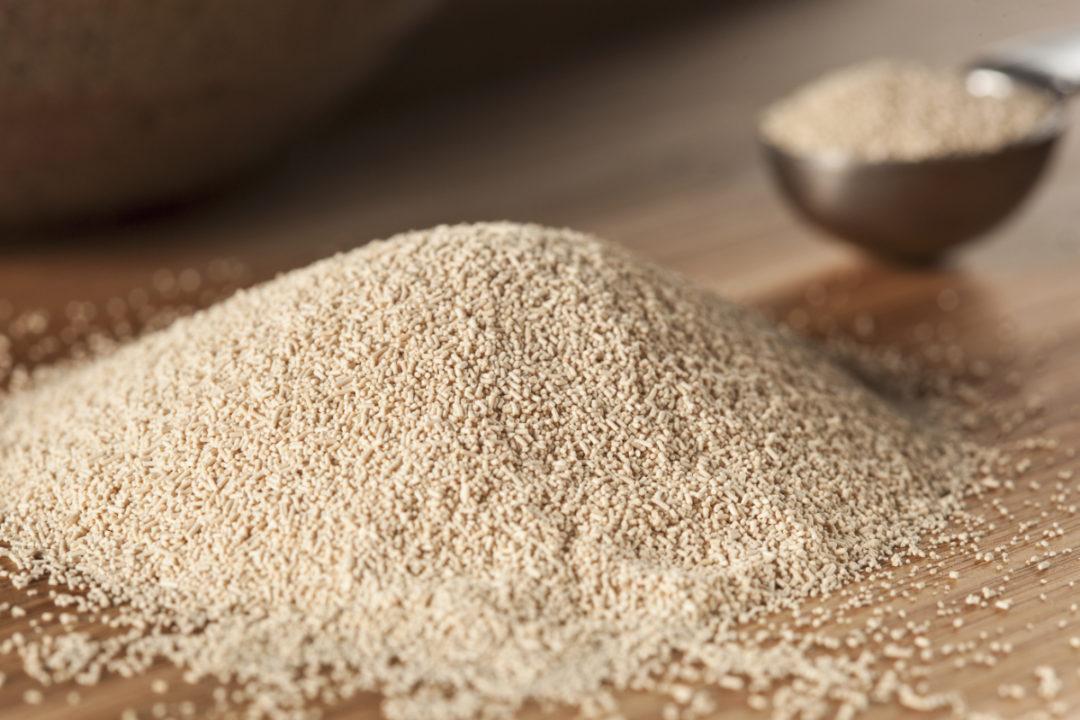 Raw yeast