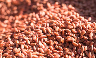 Soft red winter wheat crop lead