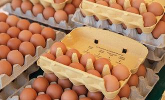 Eggcartons lead