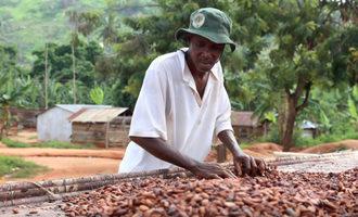 Cocoafarmerdryingbeans lead