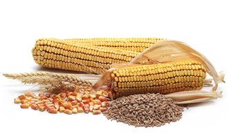 Cornwheat lead
