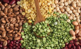Plantproteins lead