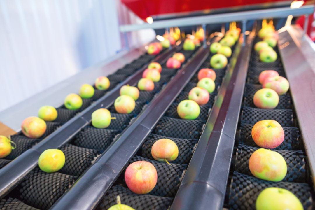 Apple processing line