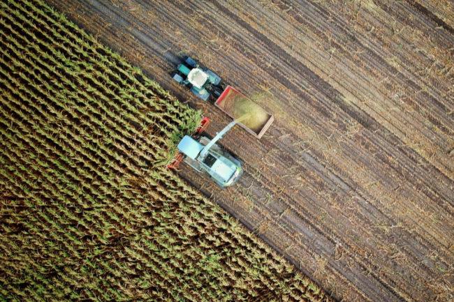 Tate & Lyle PLC harvesting