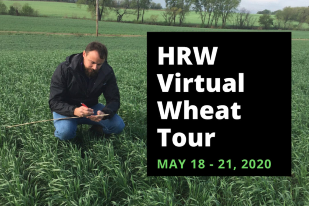 Virtual wheat tour