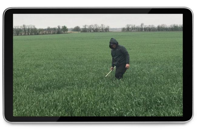 Virtual wheat tour
