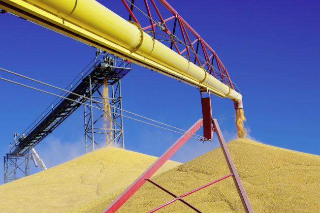 Grain bin unloading corn