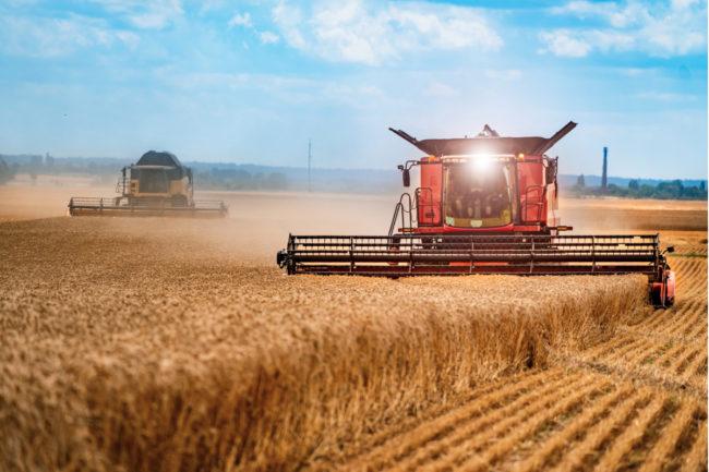 Grain harvesting combines harvesting wheat