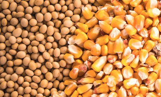 Soybeanscorn lead