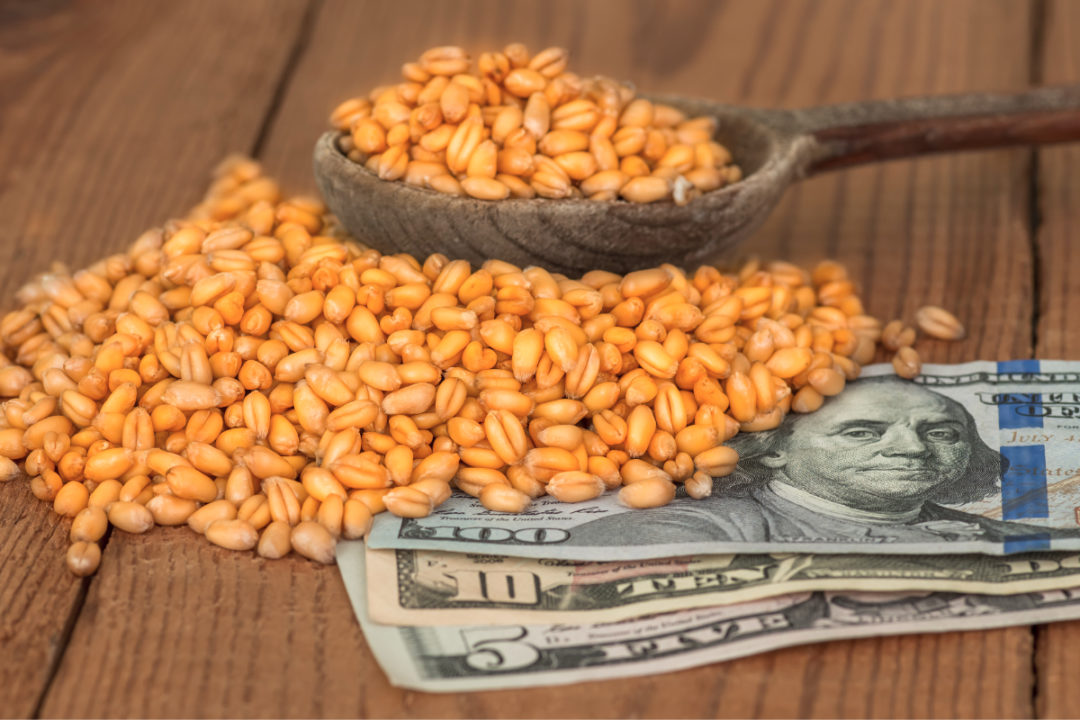 Wheat grains and money