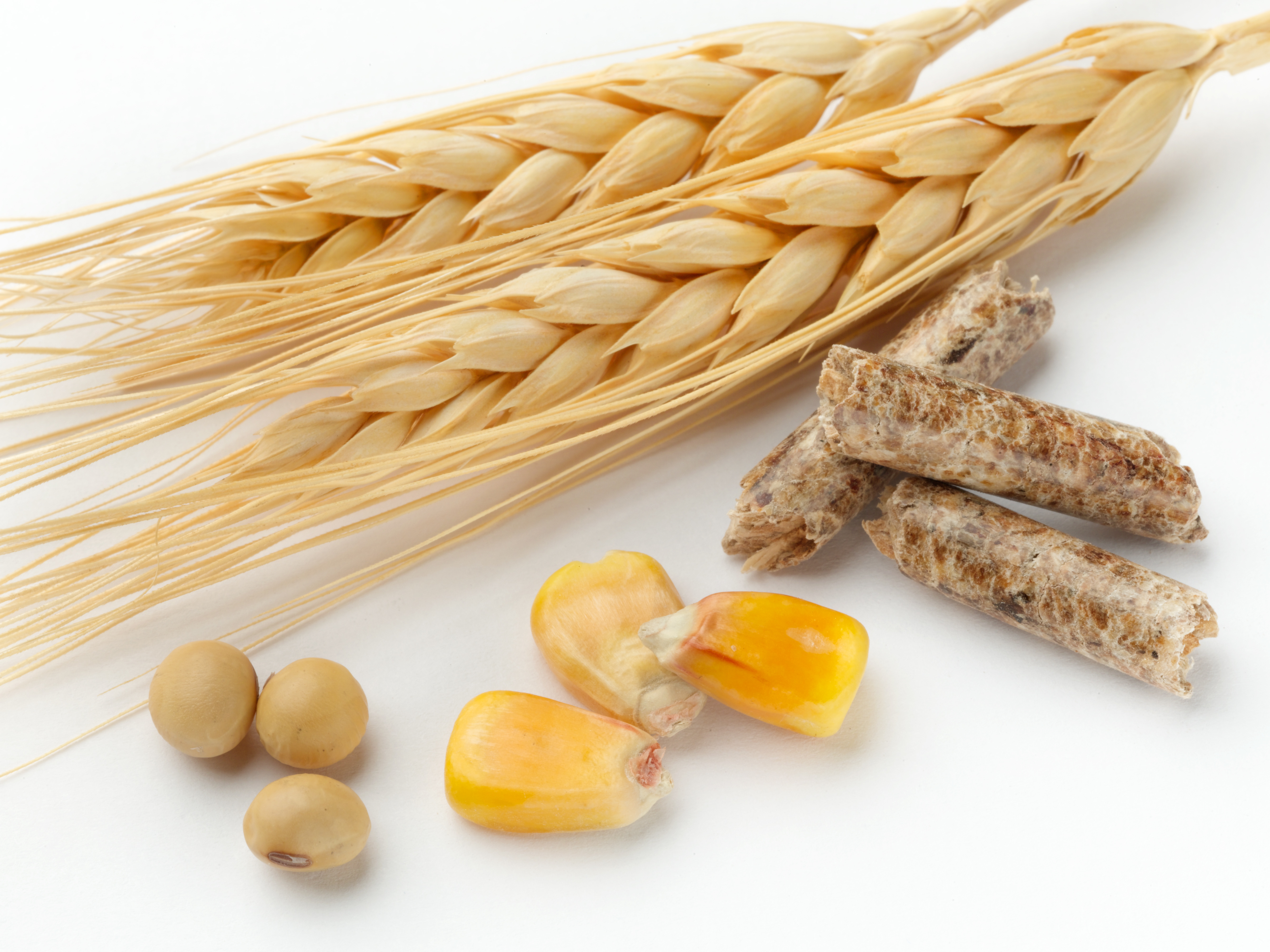 Corn wheat and soybeans on white background