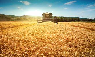 Wheat 08202020