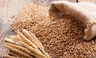 Wheat lead