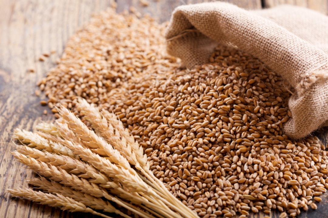 wheat ears and grains