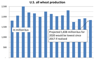 Wheat production