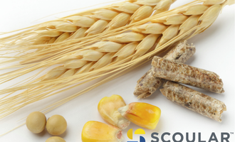 Scoular new logo with grains photo cred scoular and adobe stock e