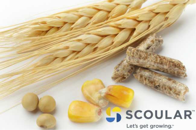 Scoular new logo with grains