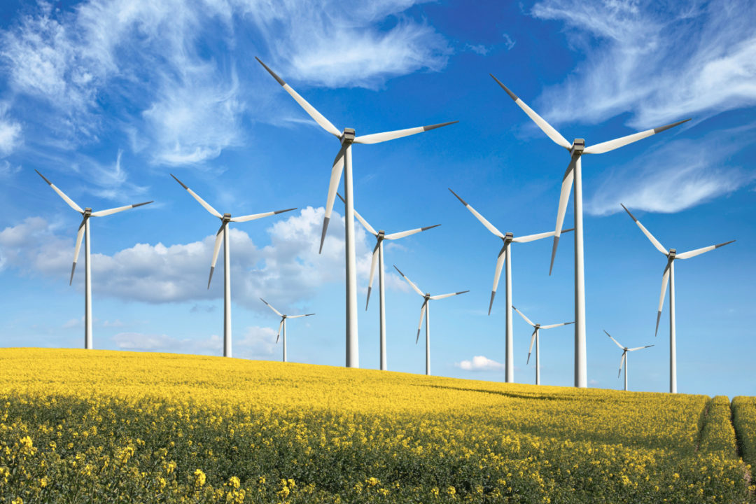 Wind turbines in a canola field