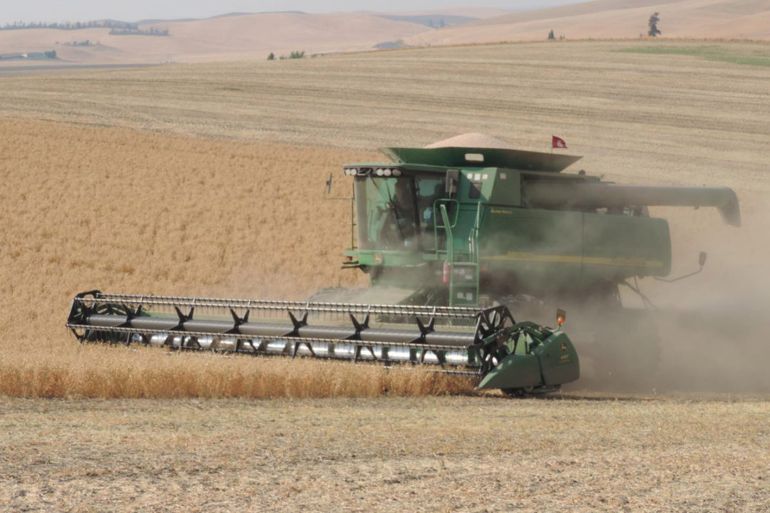 Hinrichs Trading Company chickpeas harvest