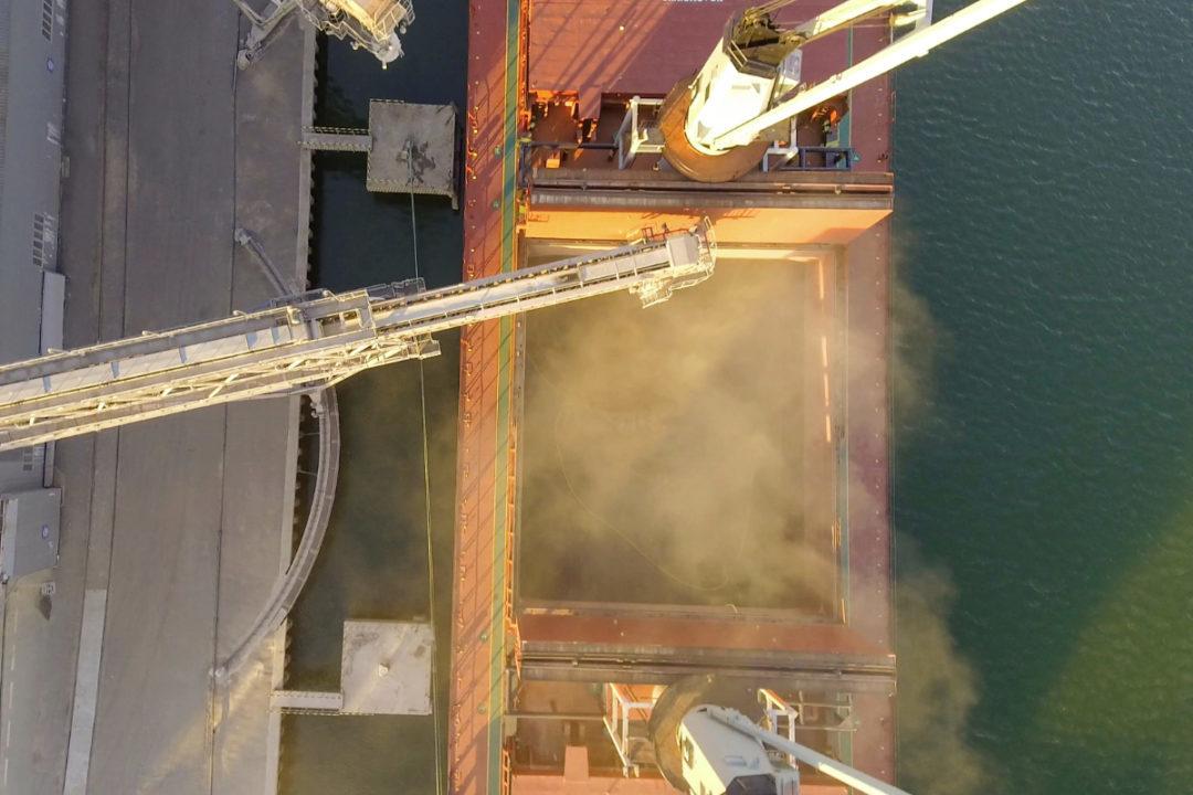 Grain export shipping
