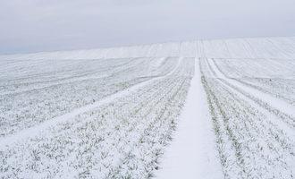 Snowywheatfield lead